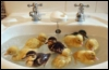 zyrya: (animal - cute - basin ducklings)