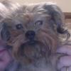 rpresser: picture of Ross's dog (Default)