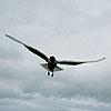 a_pernat: (Der Flug)