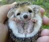 a_taller_tale: (Hedgehog!)
