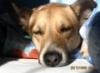yug_rishon: (dog)