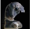 alex_lukjanov: (Кот и крыса)