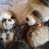 werepuppyblack: (bears)