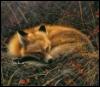 tinwelote: (Fox Dreams)