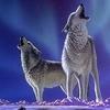 infor: (Wolfs)