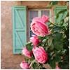 gatita_shu: (home sweet home)