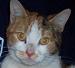 thnidu: our cat (Ista)