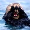 brumeier: (Otter Face)