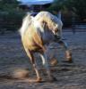 dancinghorse: (Dancing Camilla)