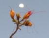 dancinghorse: (spring moon)