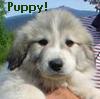 pyrsandponies: (puppy!)