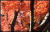 grean_tea: (fall)