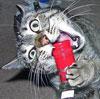 solar_kitten: (vodka)