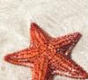 starfishstar: (Default)