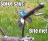 zephyr_macabee: (Spike says)