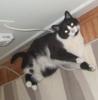 melagee: (cat, Rygel, sideways)
