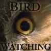 linaelyn: (birding - eye by Estel)