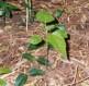amandac777: (Plant)