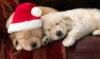 jukebox_csi: (Christmas puppies)