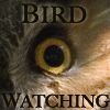 estel: (bird watching)