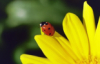 toto_too514: (Ladybug)