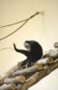 faina: (monkey)