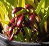 d_trektone_w: (orchid)