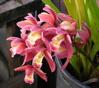 d_trektone_w: (orchidO)