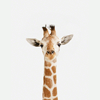coffeeontherocks: Icon of a giraffe. (Stock - Giraffe) (Default)