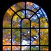 centauress: (tree window)