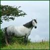 centauress: (horse)