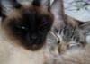 ogolka: (кошки)