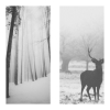 lovelyobscuredreams: (winter deer)