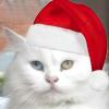 b00_dc: (глазокот-новогод)