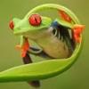 dotje_lieveke: (frog)