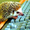 pax_athena: (computer)