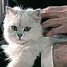 blofelds_cat: (Blofeld's Cat calm)