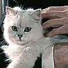 blofelds_cat: (Blofeld's Cat calm) (Default)