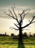 kassen: (дерево)