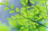 kassen: (листья)