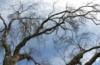 kassen: (дерево еще одно)