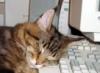 luar_soll: (Компьютерный кот)