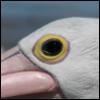 megadest: (Bird's Eye)