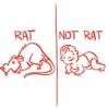 ninjarat: (Rat|Not Rat)