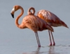skatie: (Flamingo)