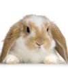 zoya_g: (bunny)