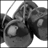 angelicmobster8: black and white photo of cherries (Cherries)