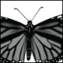 angelicmobster8: black and white photo of a monarch butterfly (Butterfly)