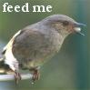 bibliogirl: (bird-feedme)
