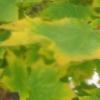skatie: (leaves)